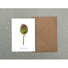 Simply Flowers Dobbelt kort Allium knopp